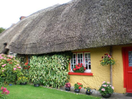 House My Dog Ireland
