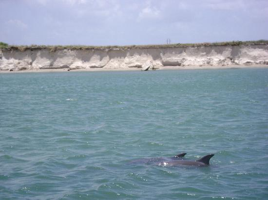 Dolphin Encounters: The captain does a great job of getting close to the dolphins.