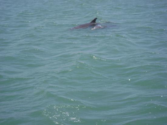 Dolphin Encounters: You do not just see one or two, but many dolphins while out on the tour.