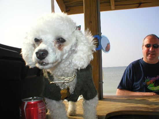 Gulf Coast Barat Daya, FL: This dog hired us some jetskis!!