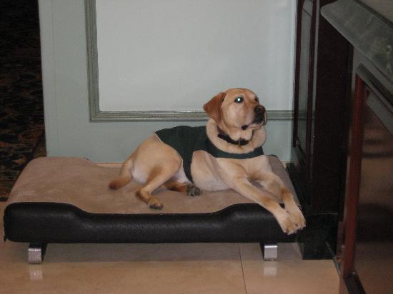 โรงแรม เดอะ แฟร์มอนท์ แวนคูเวอร์: Dog1