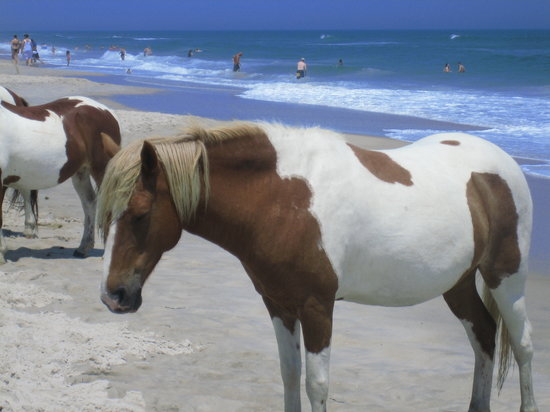Assateague Beach Photo