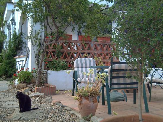 La Casa del Viento: La Rosa's private patio, with local cat