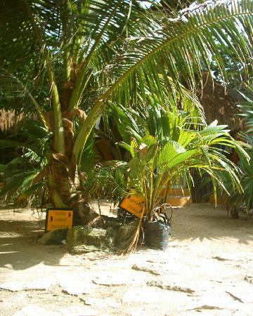 Cabanas Playa Condesa: Baby palm trees for the future
