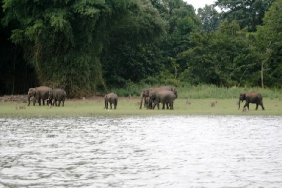 Orange County Resorts Kabini : Wild Elephant herds