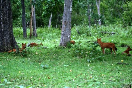 Orange County Resorts Kabini: Wild Dogs