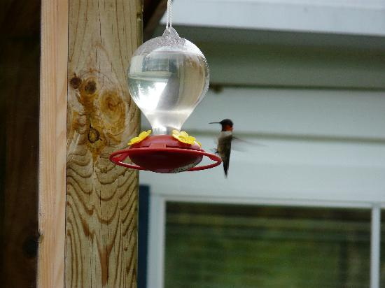 Hummingbirds at Deer Haven cottage