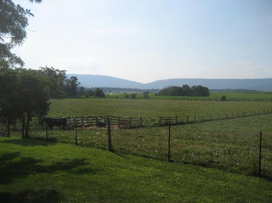 Piney Hill Bed & Breakfast: View from Rosebud's back deck
