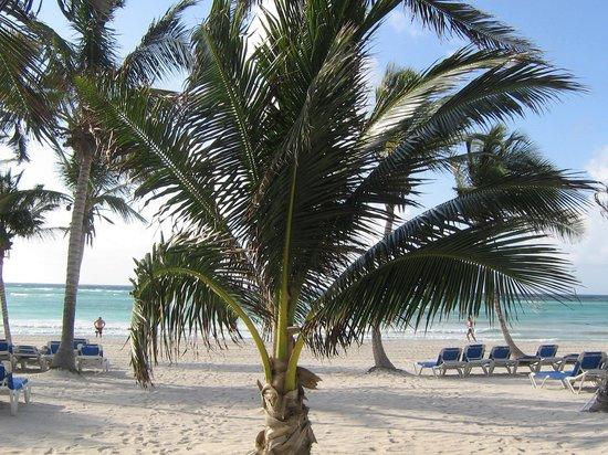 Barcelo Maya Beach: le palme