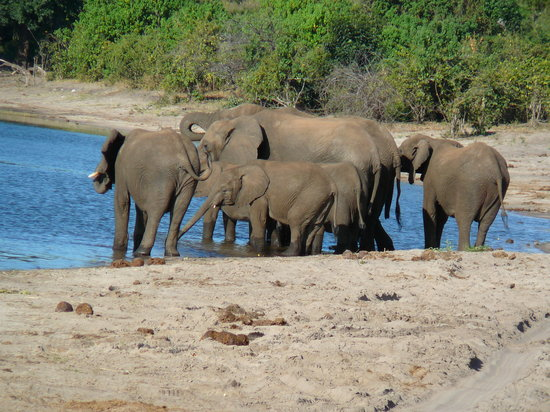 Botswana: elephants in Chobe river