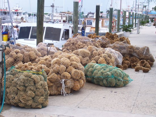 Tarpon Springs, Floride : wool and yellow sponges