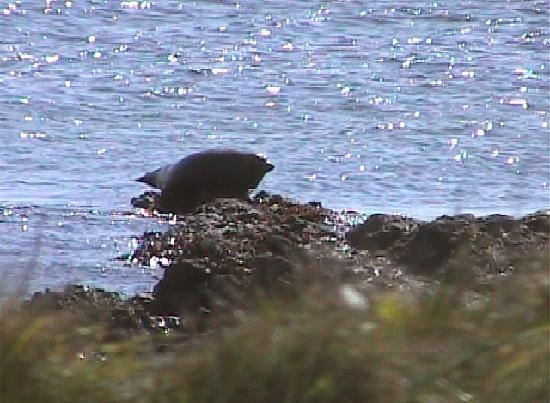 Argyll and Bute, UK: The Seals at Southend