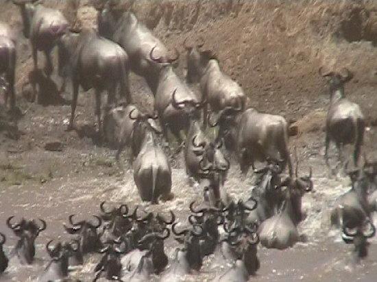 Mara Wildebeest Resort
