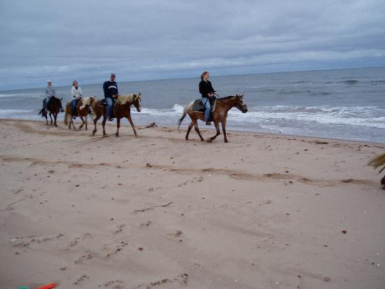 Lakeside Circle T Trail Rides: Trotting on the ocean beach of PEI - what a dream!