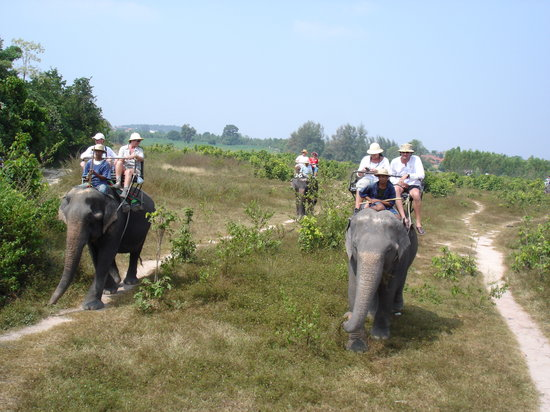 ‪Pattaya Elephant Village‬