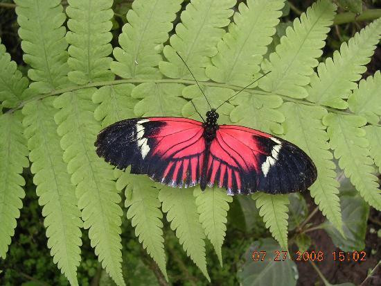 CasKaffeSu: Butterfly farm in Mindo