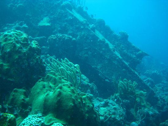 Captain Don's Habitat: The wreck