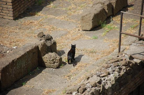Residenza Argentina: The famous cats of Largo Argentina