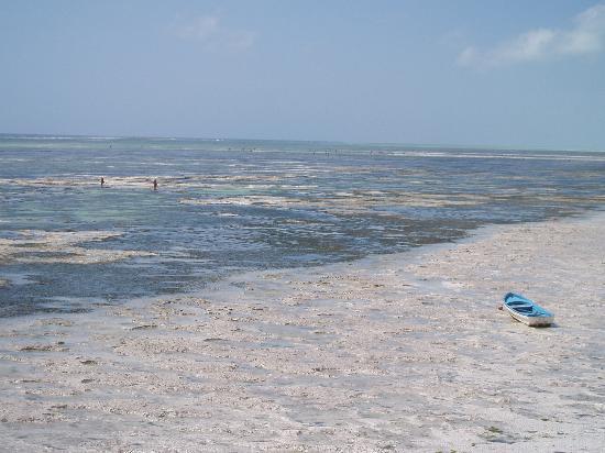 Zanzíbar, Tanzania: La spiaggia di Bwejuu con bassa marea.