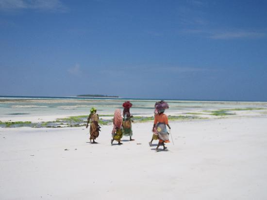 Zanzíbar, Tanzania: Isola di Mnemba sullo sfondo.