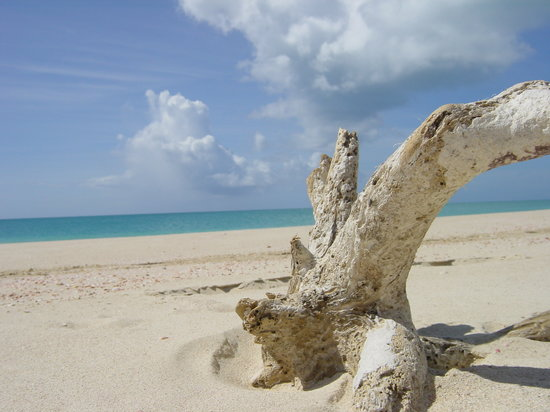 The 10 Best Things to Do in Barbuda, Antigua and Barbuda