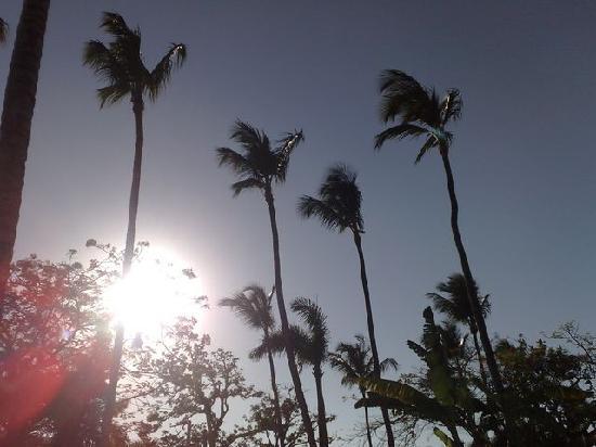 Hotel Palococo : amanecer
