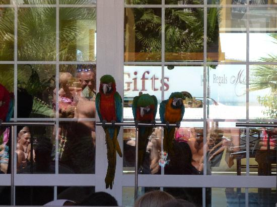 Aparthotel Paradise Club & Spa: Parrot show