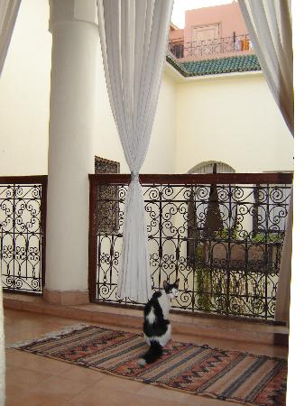 Riad Noor Charana: One of the riad's darling cats outside our room