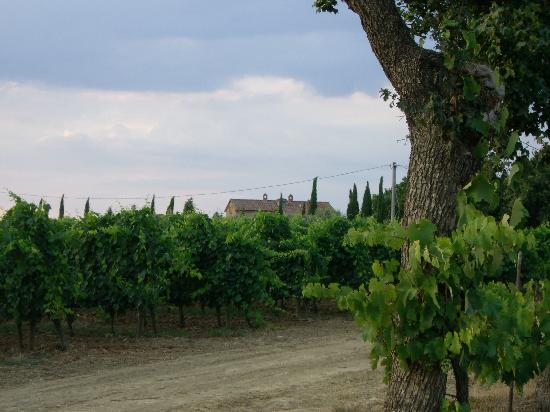 B&B Il Greppo: The vineyards at Il Greppo