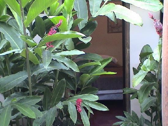 """La Posada: Rooms """"hidden"""" in the vegetation"""
