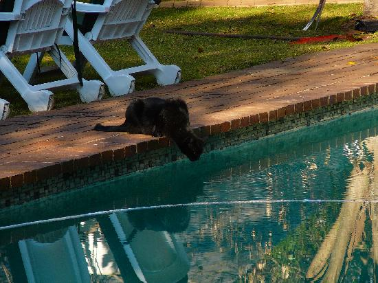 Melrose Place Guest Lodge: Pool gets a visit from the Melrose cat