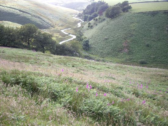 Higher Langridge Farm : Exmoor mountain stream