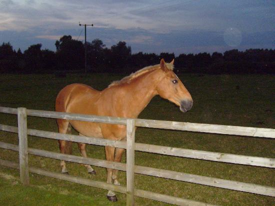 Grange Farm Country Cottages: The owners horse