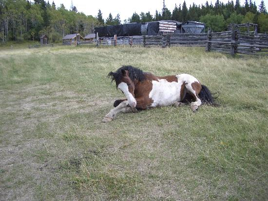 Brewster's Kananaskis Guest Ranch: One of the horses