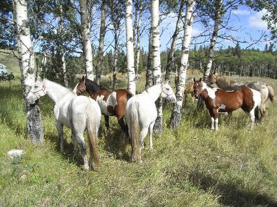 Brewster's Kananaskis Guest Ranch : The horses