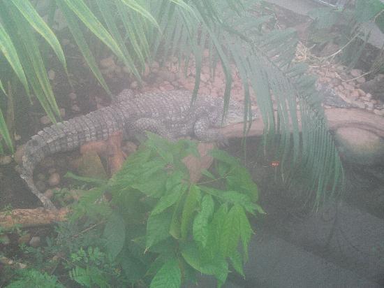 Parkdean Resorts - Torquay Holiday Park: paignton zoo