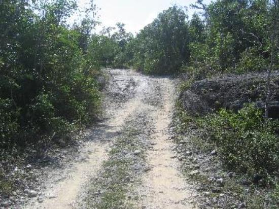 The North end MTB trails
