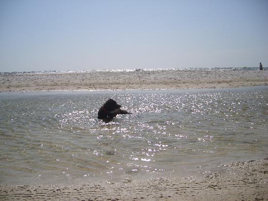 Cape San Blas: relaxing in fresh water pool