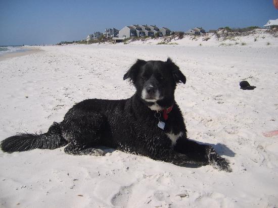 Port Saint Joe, فلوريدا: Winnie the Pooch