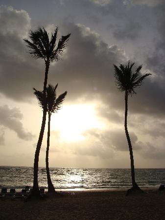 Sirenis Punta Cana Resort Casino & Aquagames: Gorgeous