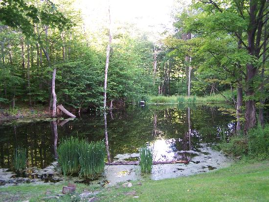 Black Dog Lodge: Another beautiful pond view.