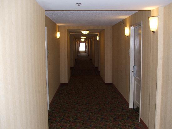 Hilton Garden Inn Albany: Hallway To The Room