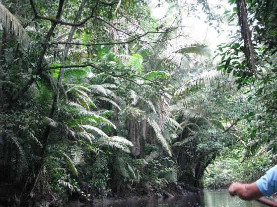 Napo Wildlife Center Ecolodge: Paddled down the creek toward the lodge