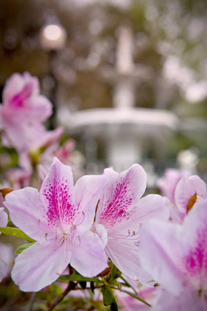 Σαβάννα, Τζόρτζια: Savannah is famous for her azaleas
