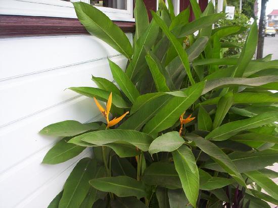 Swan's Cay Hotel: Hermosas flores que adornan la fachada