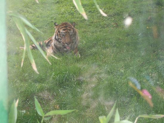 Dublin Zoo: Where cats live