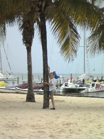 Aquamarina Beach Hotel: My son trying to climb!