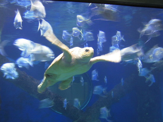 Virginia Beach, Wirginia: Sea Turtles