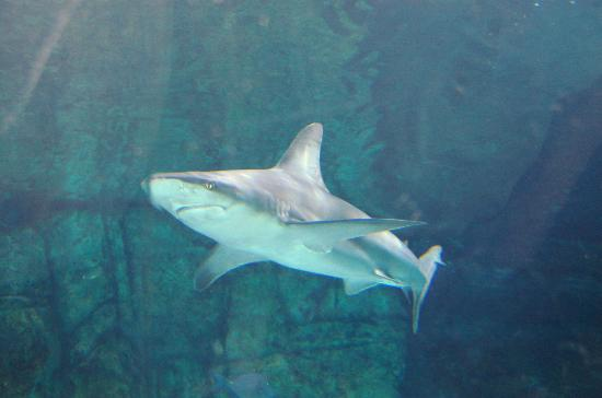Newport Aquarium: Get up close to a SHARK!