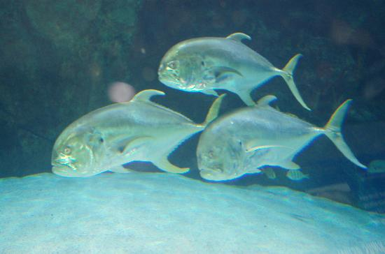 Newport Aquarium: Lots of aquatic life to see.